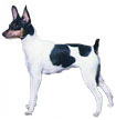 toy fox terrier - NO.1# BIG LIST OF THE MOST EASIEST TO TRAIN SMALL DOGS BREEDS